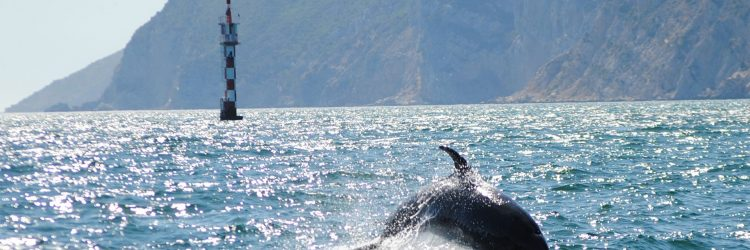 Golfinhos_sadoarrabida